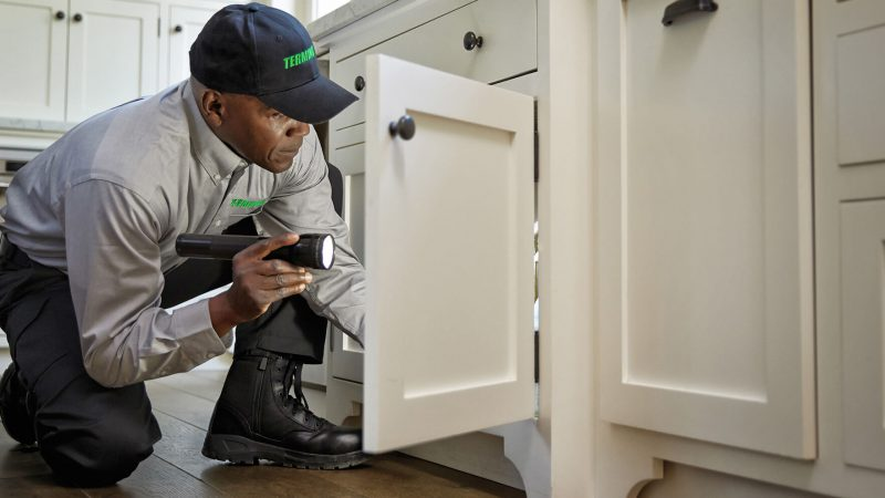 The benefits of regular pest inspection in Gold Coast